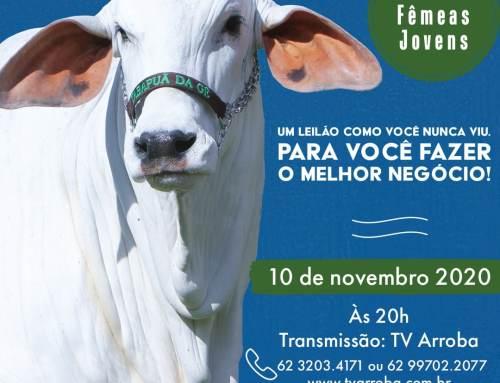 Leilão Tabapuã da Gê 05 Fêmeas
