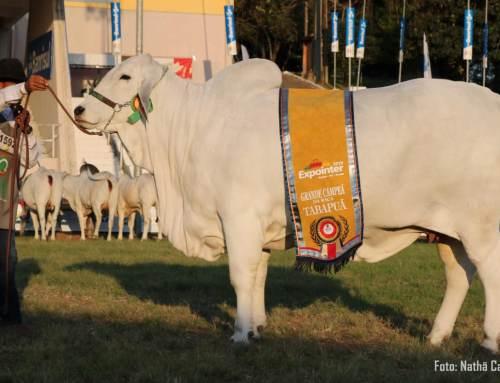Em Esteio Tabapuã da Gê 05 conquista Grande Campeonato